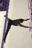 3rd Texas State Gymnastics Championships Photo