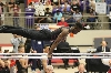 33rd Texas State Gymnastics Championships Photo